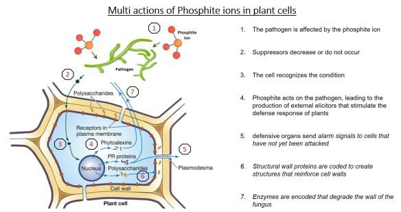 phosphite ion