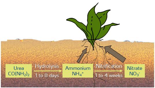 urea-ammonium-nitrate